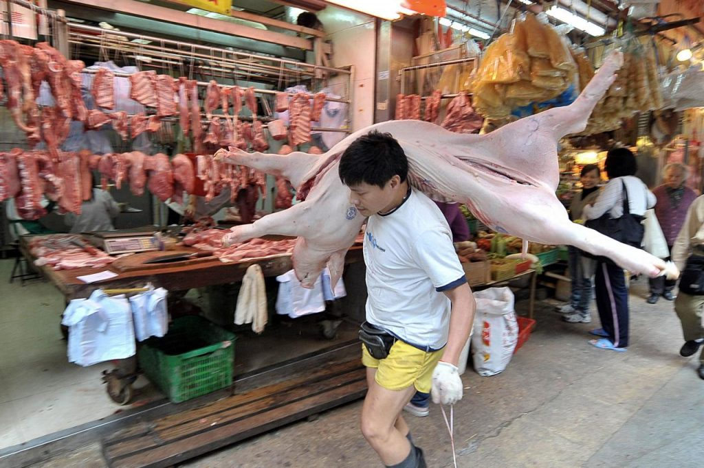 本港養豬場已於一月十二日起禁止使用廚餘作為飼料。