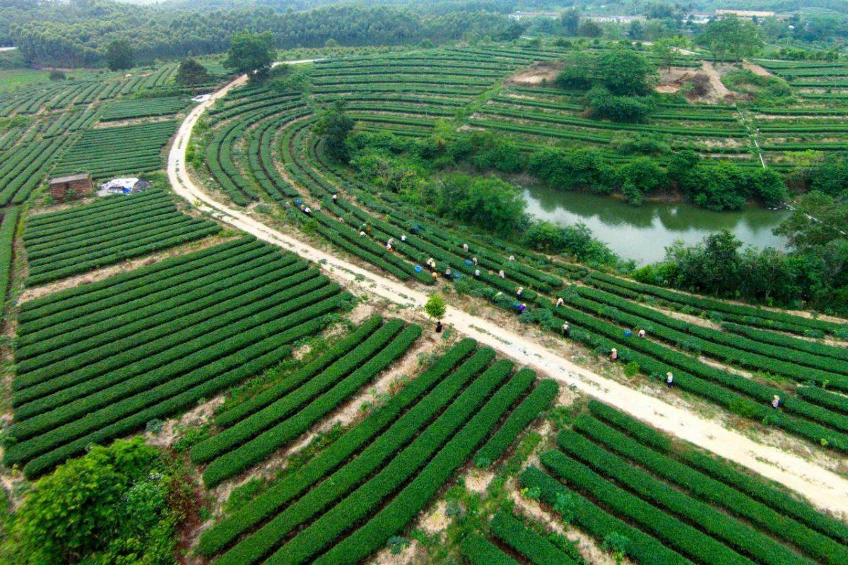 惠州農業的對外交流合作已成為常態,替該市農業打開不同渠道。